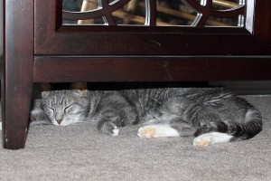 One of Abbey's new hiding places.