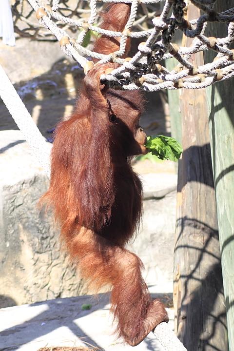 20130407_Lowry Park Zoo_282